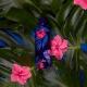 """Puro H&C botella de acero inoxidable doble pared """"Tropical flowers"""" 500ml azul oscuro brillante"""